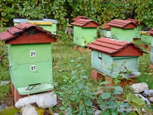 bees-beekeeper