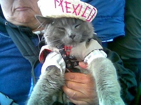 gato-mexico-22