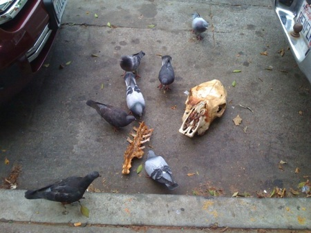 pigeons_eating_a_horse_skull