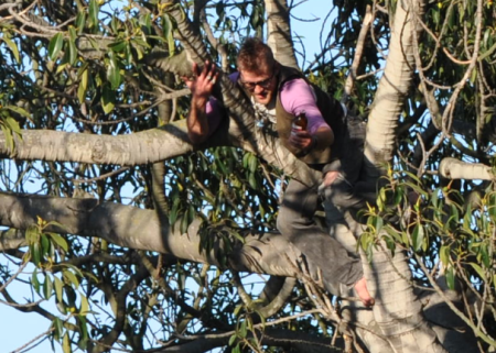 dolores park tree catch